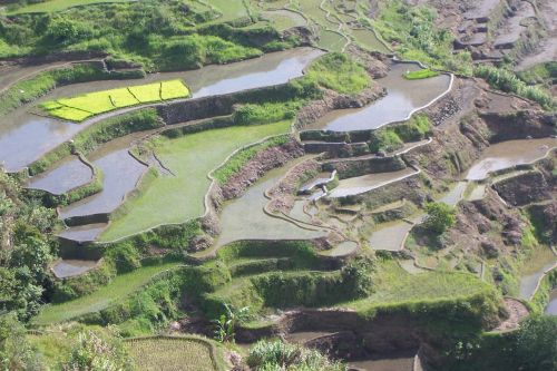 terraces rice cultivation rice fields