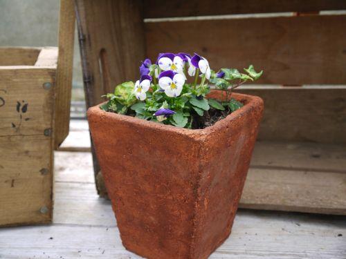 terracotta pot viola garden