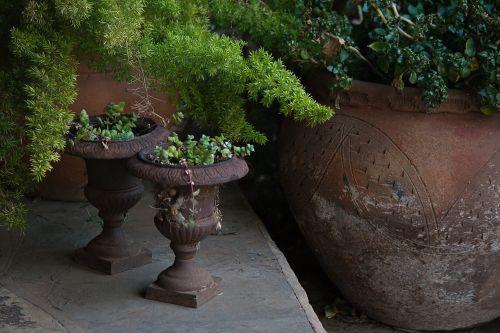puodai, molis, raudona, augalai, veranda, terakotos puodai su augalais