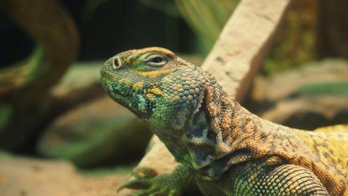 terrarium zoo wuppertal
