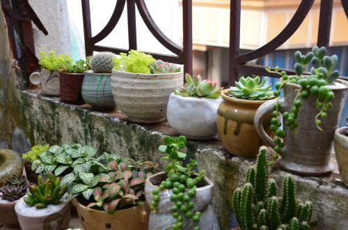 terrarium tree pottery