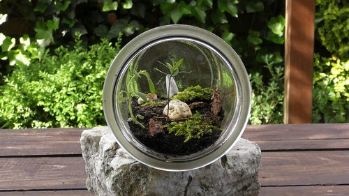 terrarium  biosphere  habitat