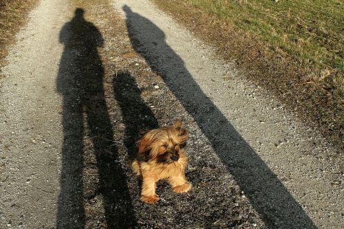 terrier master sit