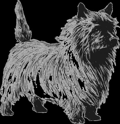 terrier dog pet