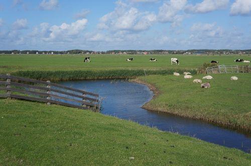terschellinger polder at groin terschelling polder