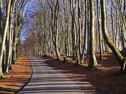 teutoburg forest forest path beech wood