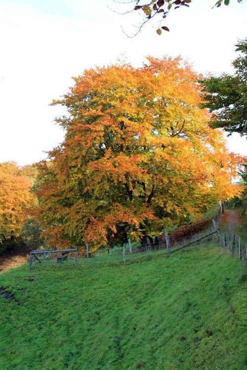 teutoburg forest autumn tree