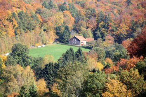 teutoburg forest forest autumn