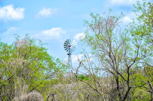 texas landscape  windmill  mesquite tree