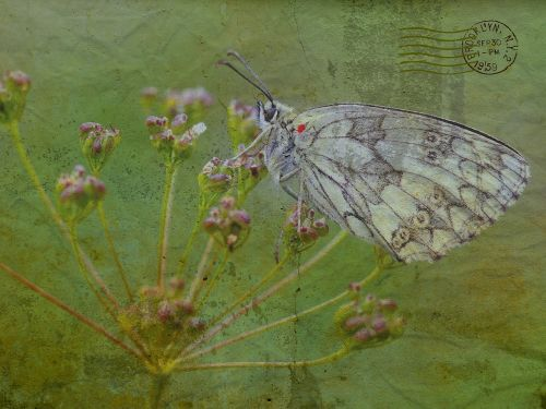 texture background butterfly