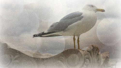 tekstūra,fonas,kajakas,paukštis,žiema,sniegas,Bokeh,gyvūnas,balta,pragaras,švelnus,švelnus,šaltas