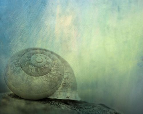 texture background snail
