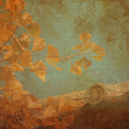 texture background ginkgo