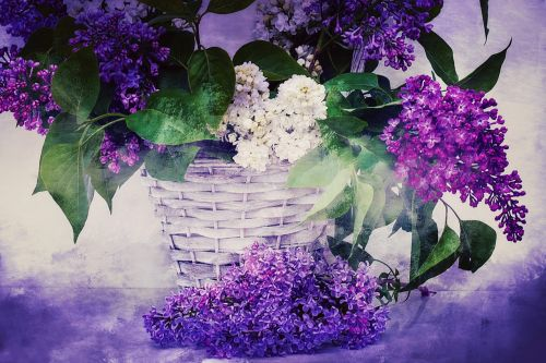 texture background lilac