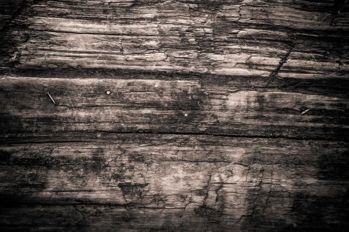 texture wood monochrome