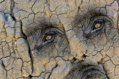 texture the eye of an elephant face