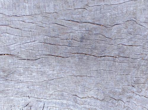 texture wood tree
