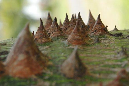 texture  nature  plant