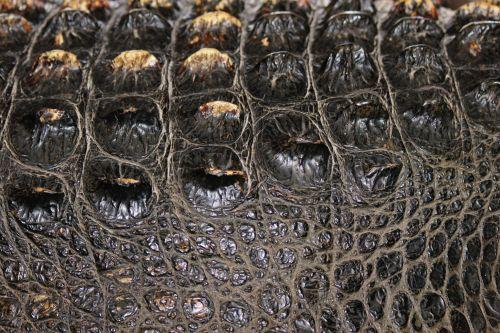 Texture Gator Skin