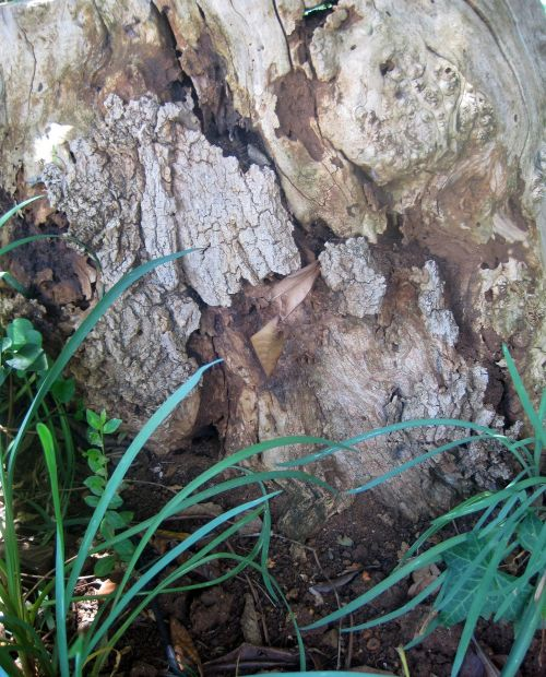 Texture Of Dead Wood