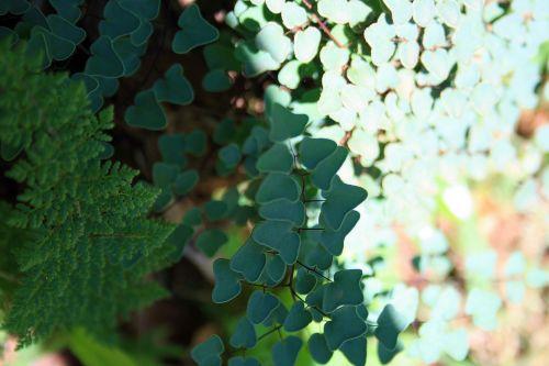 Textured Ferns