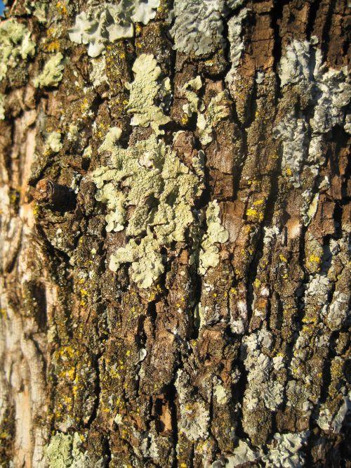 Textured Lichen