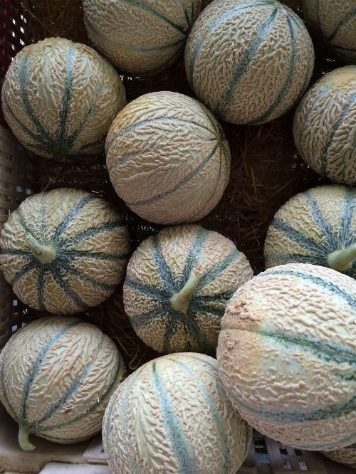 cantaloupe melons fruit