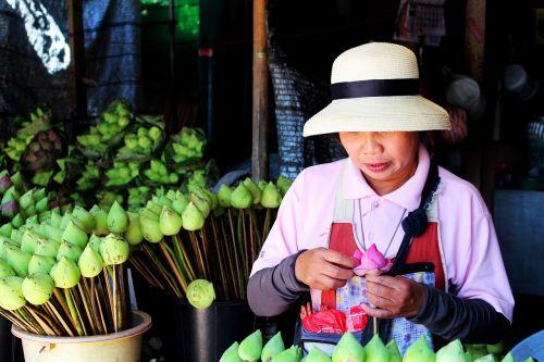thailand lotus flower aquatic plant