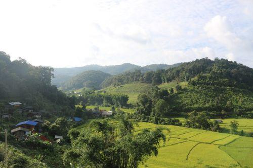 thailand landscape rice patties