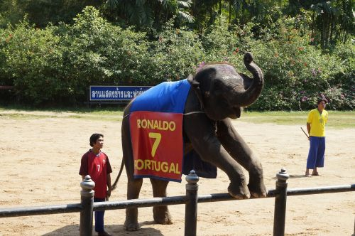 thailand packages elephant