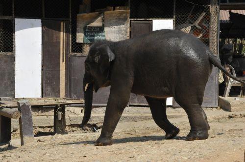 thailand elephant nature