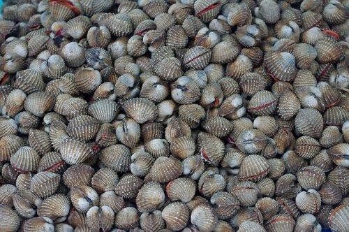 thailand-market  mussels  fresh mussels