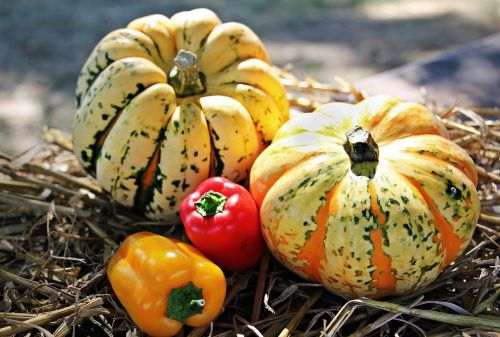 thanksgiving pumpkins paprika