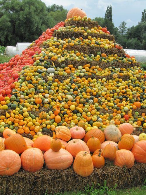 thanksgiving pumpkin soup pumpkin