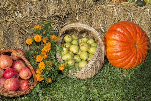thanksgiving fruits festival