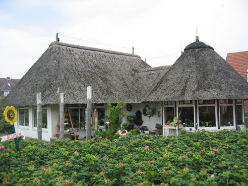 thatched roof thatched home