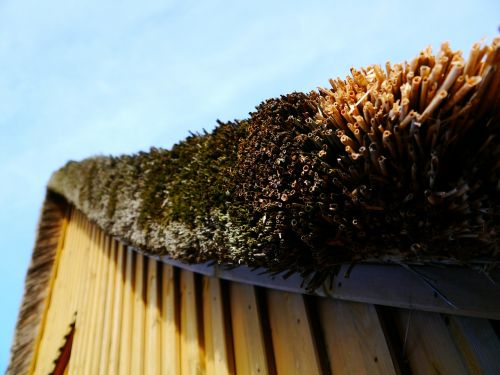 thatched roof roof grass roof