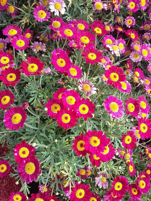 the  flower  flowers