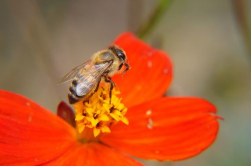the bee bee pollination