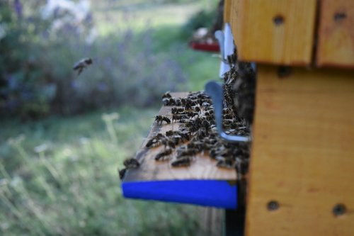 the bees  the hive  beekeeping