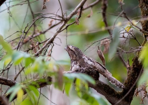 the birds mouth frog doi lang zoo