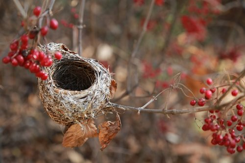 the bird's nest  the new house  nest