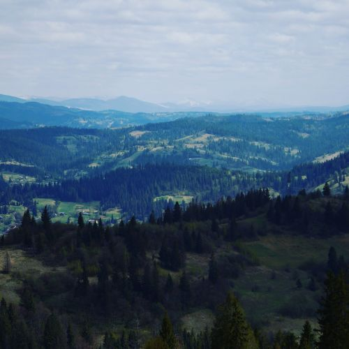 the carpathians mountains forest
