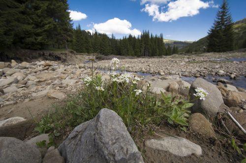 the carpathians landscape nature