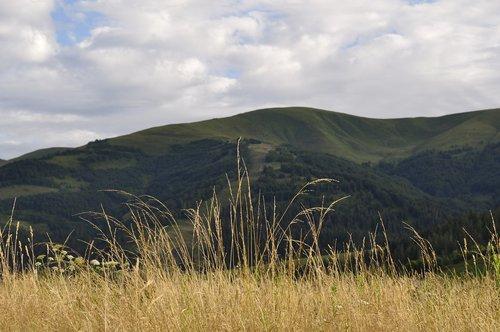 the carpathians  meadow  grass