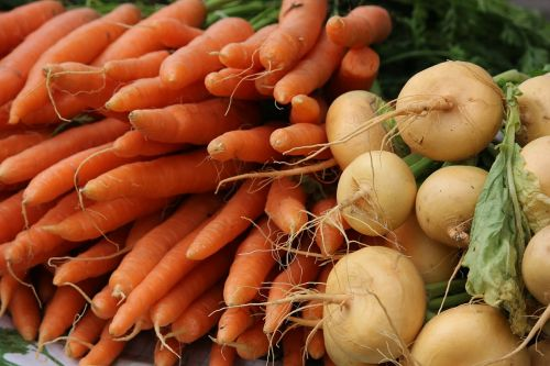 the carrot turnip vegetarian