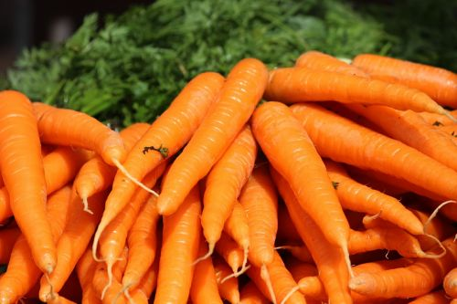 the carrot carrots bunch orange vegetable