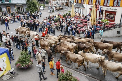 the cattle market the cow appenzell