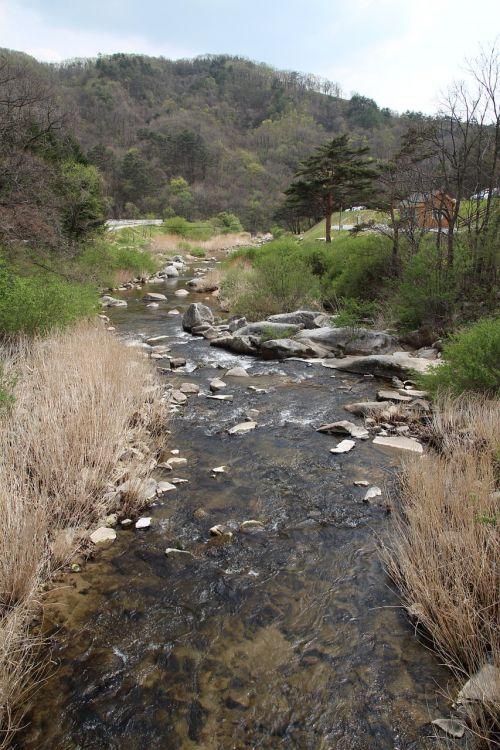 the creek rivers nature