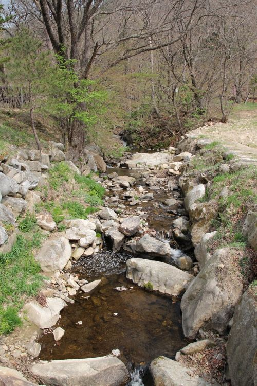 the creek nature spring
